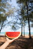 A hand having red watermelon by the sea in sunny day. A hand having red watermelon by the sea with pine trees in sunny day royalty free stock photography