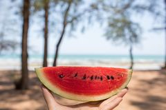A hand having red watermelon by the sea in sunny day. A hand having red watermelon by the sea with pine trees in sunny day stock photography