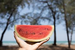 A hand having red watermelon by the sea in sunny day. A hand having red watermelon by the sea with pine trees in sunny day stock image