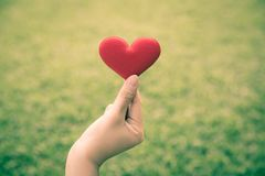 Hand and heart in garden. Woman hand`s holding fabric red heart on green grass background, love and care concept Stock Image