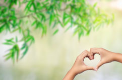Hand in heart shape with bamboo leaves background Stock Photos