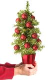 Hand held Christmas tree Stock Images
