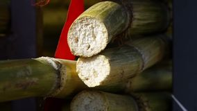 Two bamboo sticks cut. A hand held, extreme close up shot of some bamboo sticks that have been previously cut, exposing the white pulp stock footage