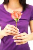 Hand held Rose flower Stock Image