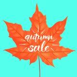 Hand het getrokken van letters voorzien van een uitdrukking Autumn Sale Vector illustratie Vorm van esdoornblad Creatief ontwerpm Royalty-vrije Stock Afbeelding