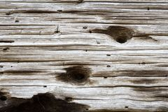 Hand hewn beam with drilled holes and pitted texture. Horizontal aspect Royalty Free Stock Photography