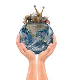 Hand hold animal on the earth Stock Images
