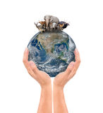 Hand hold animal on the earth Stock Photos
