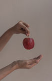Hand hold apple Royalty Free Stock Photos