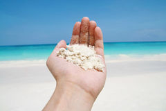 Hand hold beach sand Stock Image