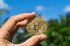 Hand is hold Bitcoin on the background of nature stock photos