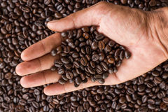 Hand hold coffee beans Stock Image