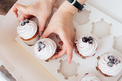 Hand hold cupcake with blackberry. Two hands hold cupcake with blackberry in box Royalty Free Stock Photography