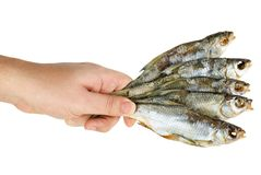 Hand hold few salted dried fishes Stock Photos