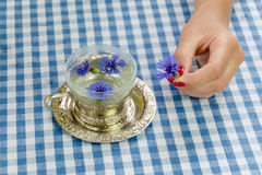 Hand hold fresh cornflower blossom. herbal tea cup Stock Photos