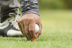 Hand hold golf ball with tee Stock Images