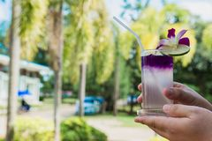 Hand hold Juice of Butterfly pea with lemon and ice in glass. Herb drink for refreshment. Royalty Free Stock Photo