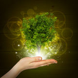 Hand hold magical green tree and rays of light Stock Image