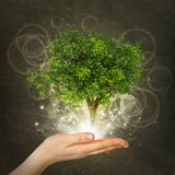 Hand hold magical green tree and rays of light Royalty Free Stock Photography