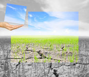 Hand hold a part of jigsaw Agriculture paddy field with cloud an Royalty Free Stock Image