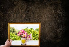 Hand hold picture frame of pink flowers and dark grunge wall Royalty Free Stock Image