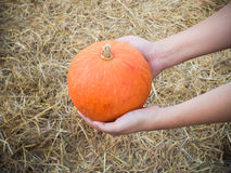 Hand hold pumpkin Royalty Free Stock Photo