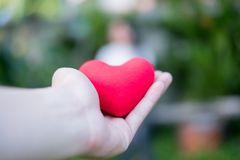 Hand are hold a red heart in the evening to replace the love in the Valentine.Give heart or love and concern to each other.Have stock images