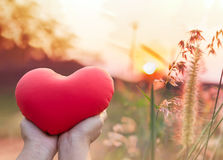 Hand hold red heart with romantic nature view of grass flower an royalty free stock image