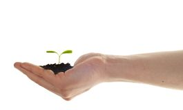 Hand hold small plant, eco concept Stock Image