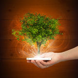 Hand hold smart phone with magical green tree Royalty Free Stock Images