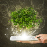 Hand hold tablet pc with magical green tree. And rays of light on dark background royalty free stock photos
