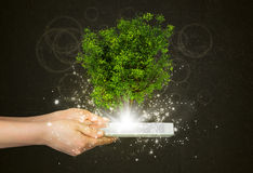 Hand hold tablet pc with magical green tree Stock Photo