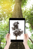 Hand hold a tablet take the photo dry tree on big tree backgroun Stock Image