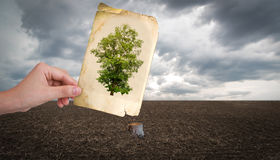Hand hold vintage picture. Of tree over cut trunk Stock Image