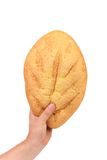 Hand hold white bread of corn meal. Royalty Free Stock Images