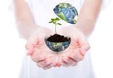 Hand hold young plant in earth isolated Stock Photo