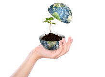 Hand hold young plant in earth Stock Image