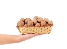 Hand holdind basket with walnuts. Stock Photos