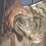 Hand holding alligator head