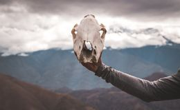 hand holding animal skull mountain clouds background stock image