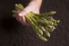 Hand holding Asparagus Royalty Free Stock Photos