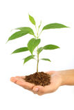 Hand holding baby plant Stock Photos