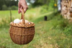 Hand is holding a basket full of eggs Stock Image