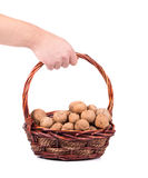 Hand holding basket of walnuts. Royalty Free Stock Photography