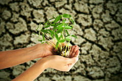Hand holding bean sprouts tree Stock Photography