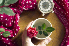 Hand holding beautiful fresh rose in a cup Stock Images