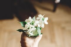 Hand holding beautiful jasmine flowers on branch in glass jar on rustic old wooden floor, copy space. Floral decor and arrangement. Gathering flowers. Rural royalty free stock photography