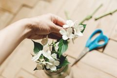 Hand holding beautiful jasmine flowers on branch in glass jar on rustic old wooden floor, copy space. Floral decor and arrangement. Gathering flowers. Rural stock photography