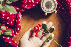 Hand holding beautiful pink rose Royalty Free Stock Photography