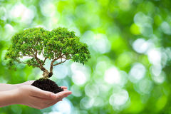 Hand holding Beautiful tree. Two Hand holding Beautiful tree on Green bokeh background in horizontal Stock Images